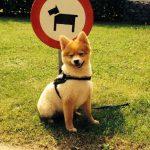 Hondenuitlaatservice Ridderkerk