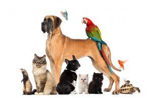 Gastenboek Huisdierenservice Met Plaisier