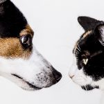 Kennismakingsgesprek Huisdierenservice Met Plaisier