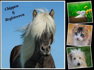 Chippen en registreren van uw huisdier